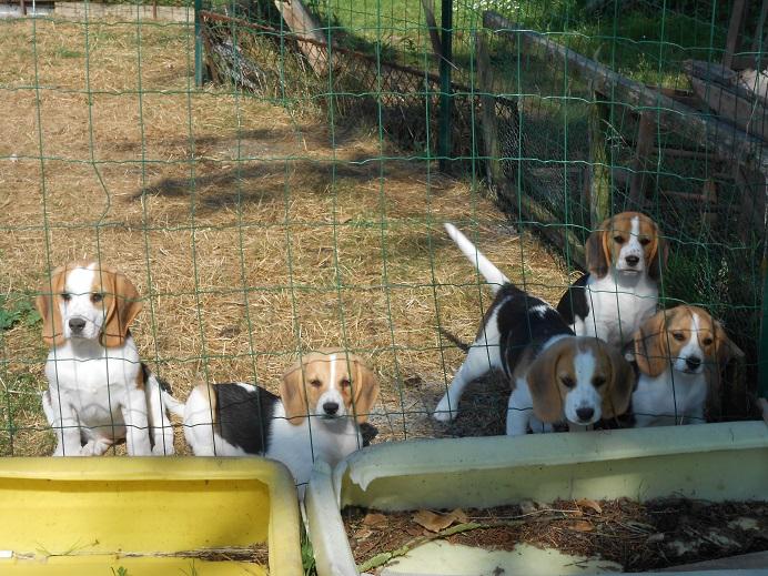 Photo envoyée sur mon email après décès de 10 chiens de la meute